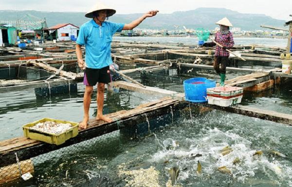 Tìm hiểu về ngành nuôi trồng thủy sản