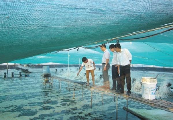 Ngành Nuôi trồng thủy sản là gì và cơ hội việc làm ra sao?