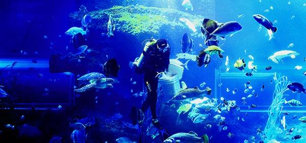 Khám phá ngành Hải dương học